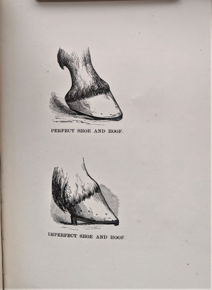 Rational Horse-Shoeing. With Illustrations. By Wildair. John E. Russell.