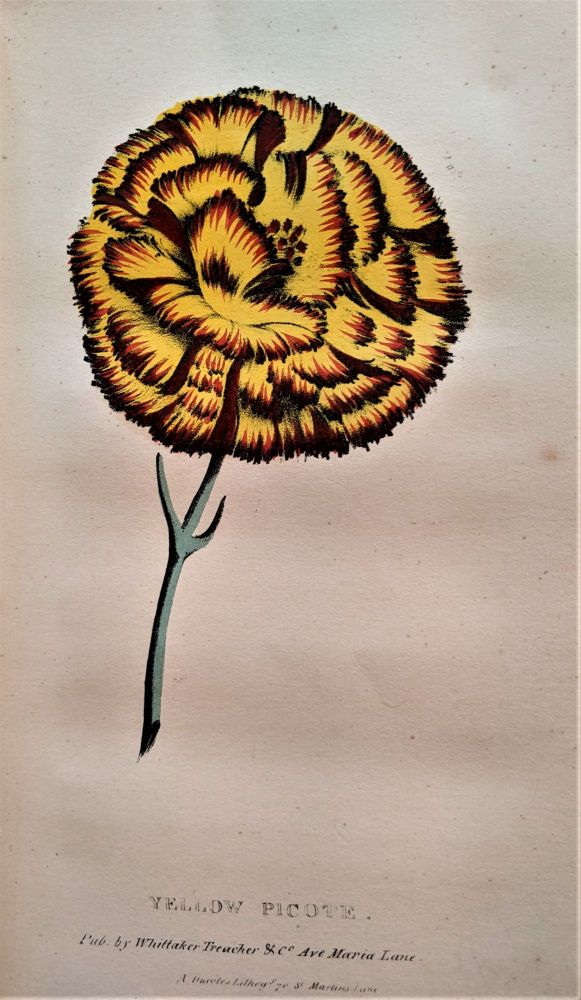 A Concise and Practical Treatise on the Growth and Culture of the Carnation, Pink, Auricula, Polyanthus, Ranunculus, Tilip, Hyacinth, Rose, and other flowers. Including a Dissertation on Soils and Manures, and Containing Catalogues of the Finest and most Esteemed Varieties of Each Flower. Thomas Hogg.