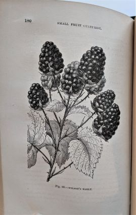 The Small Fruit Culturist. Beautifully Illustrated.