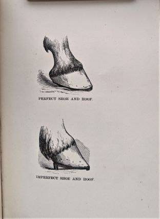 Rational Horse-Shoeing. With Illustrations. By Wildair. John E. Russell